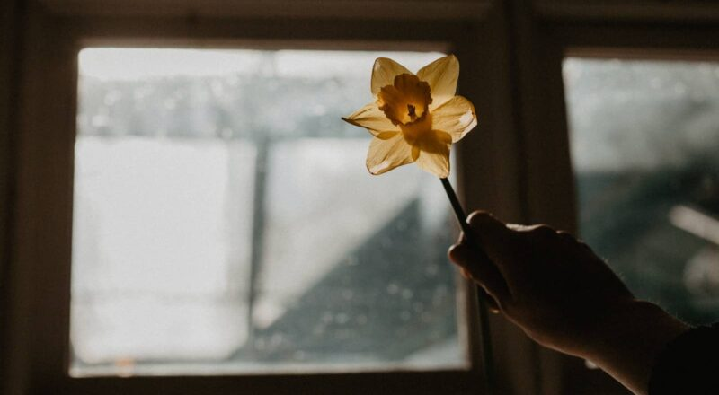 yellow flower in front of glass window