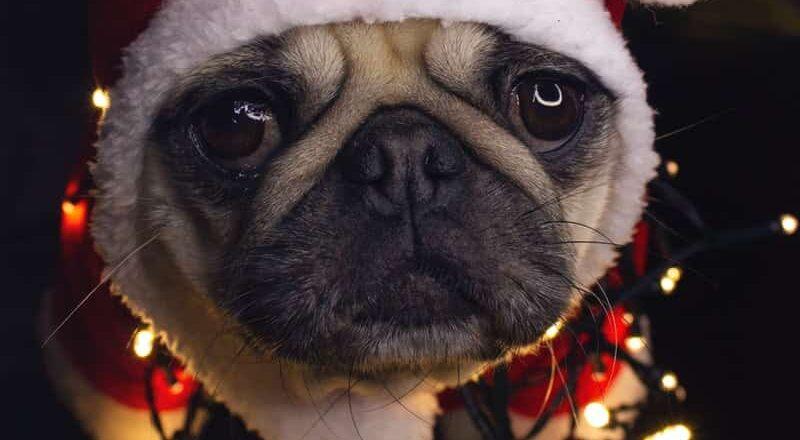 hond die kerst haat