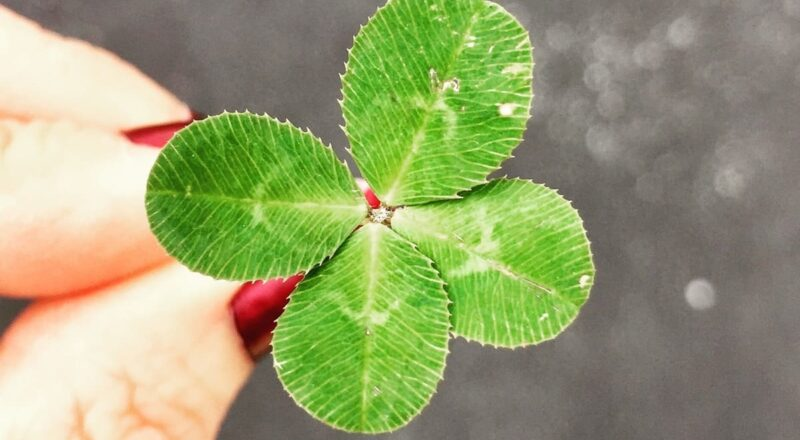 close-up photography of person holding green leaf plant